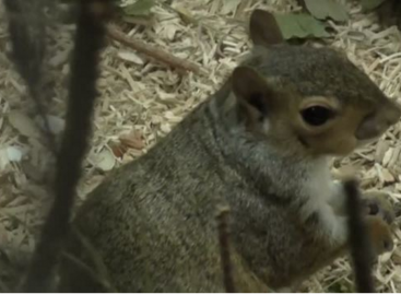 Squirrels Show Flexibility and Persistence When Foraging