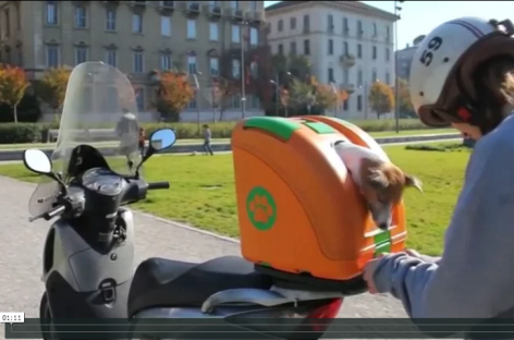 Pet Carrier for Scooters