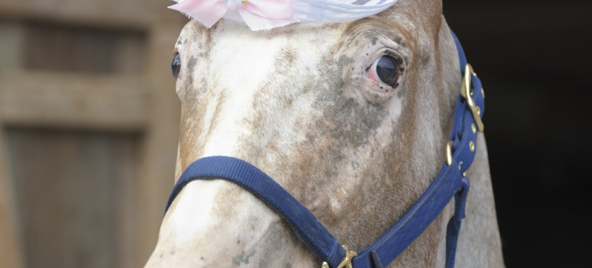 Horse Models Snappy New Suit