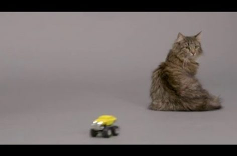 Finally, An Invention That Can Tell You What Your Cat Is Really Saying