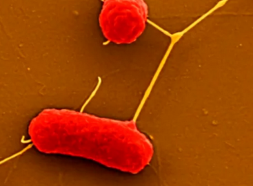 Lab-Created Molecule Could Revive Failing Antibiotics