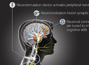 Boosting Synaptic Plasticity to Accelerate Learning