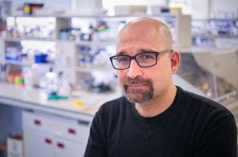 Transatlantic Team Reverses Alzheimer's, Parkinson's Symptoms in Fruit Flies