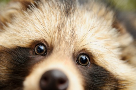 Google Can Now Teach You What a Raccoon Sounds Like