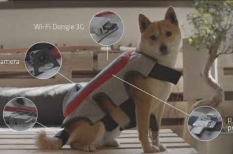 Together, We Can Make This Auto-Facebooking Camera Harness for Dogs a Reality