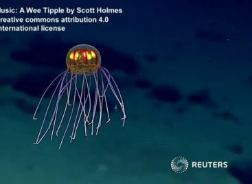 Colourful Jellyfish Wow Ocean Researchers