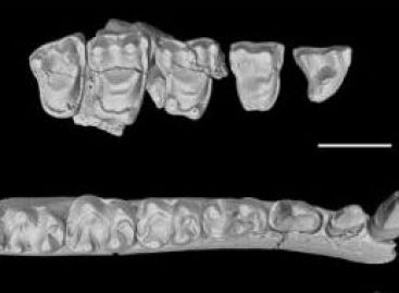 Primate Fate: Chinese Fossils Illuminate Key Evolutionary Period