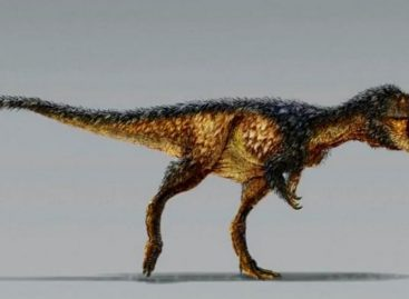 T Rex May Have Been Asian Immigrant