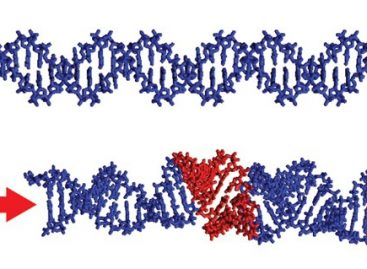 DNA 'Scrunching' Could be New Target for Antiviral Drugs