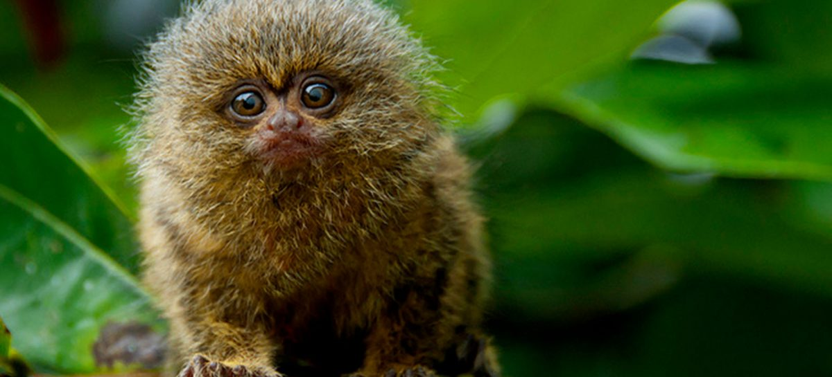 Scientists Have Created Monkeys With Parkinson's Disease