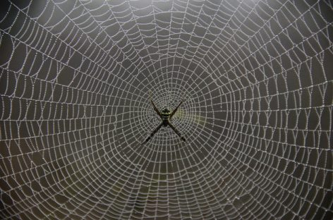 Soldiers Could Soon Be Wearing Armour Made From Genetically Engineered Spider Silk