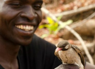 Scientists Document Wild Birds 'Talking' with Humans for the First Time