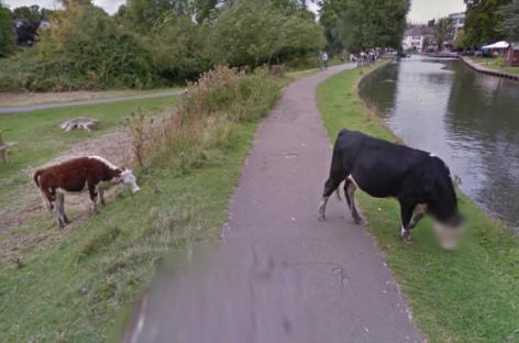 Google Street View Blurs Bullocks's Face