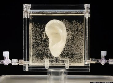 Van Gogh's Severed Ear 'Regrown' From Cells Of Artist's Living Relative