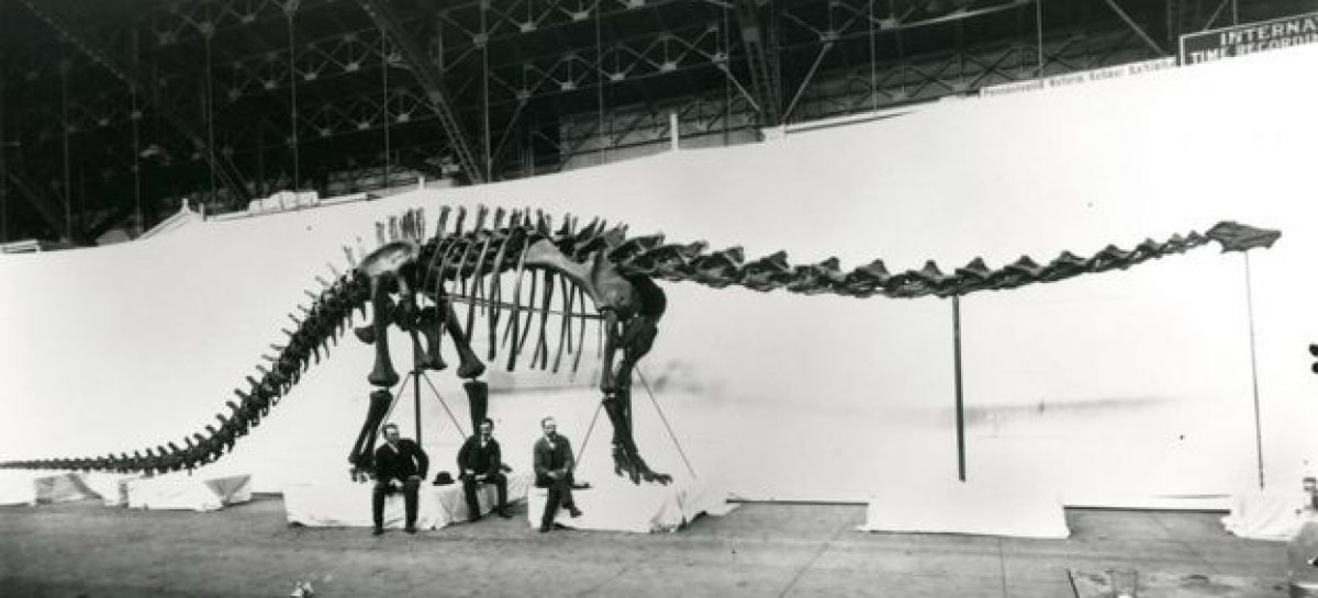 London Visitors' Last Chance to See Dippy Ahead of Tour
