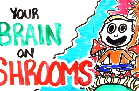 This is Your Brain…This is Your Brain On Shrooms