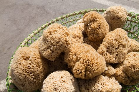 Fossil Treasure-Trove Reveals Post-Extinction World Ruled by Sponges